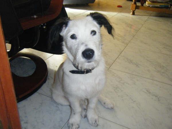 Adopción de Muky en diciembre 08!