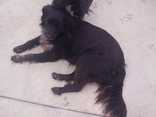 Cesna, adoptada en enero 2009!