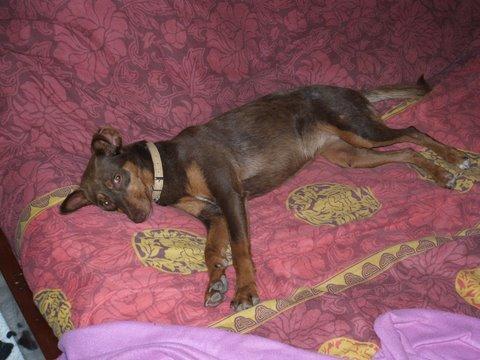Liza, Adoptada en el extranjero!