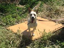 Blanqui,adoptada en el extranjero!