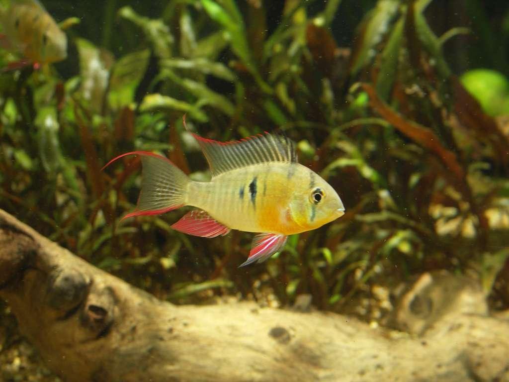 the handbook of tropical fish