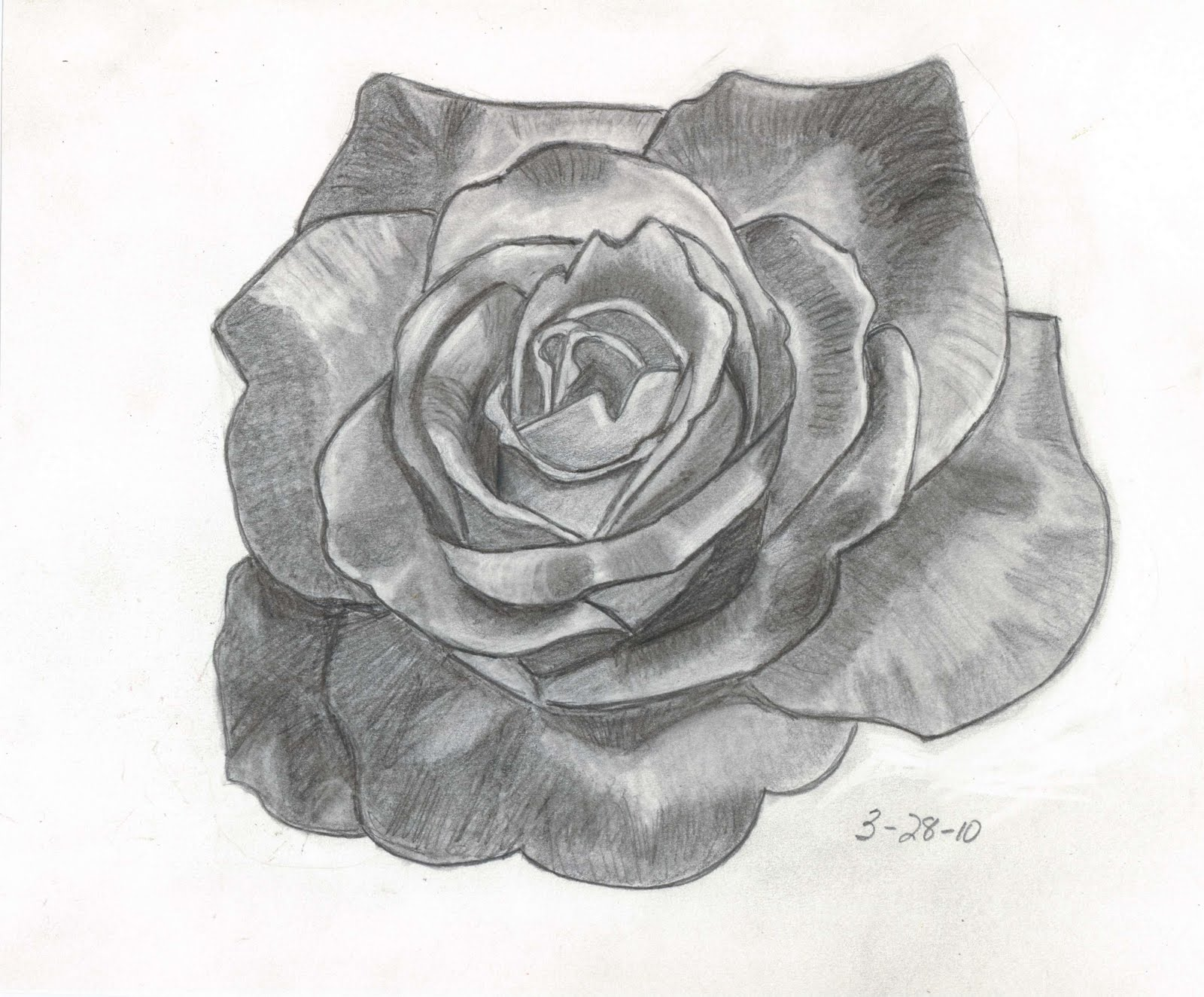 Sketches and Things: Variegated Rose -- Pencil