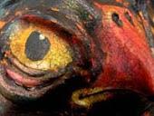 Cinderfolk Owl
