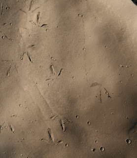 Bird tracks in the Swakop River clay