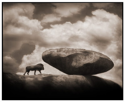 Great Photos4 Great Lion Photos by Nick Brandt