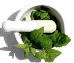 """""""Le stévia est une plante qui remplace le sucre"""""""