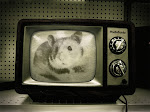 HamsterTV