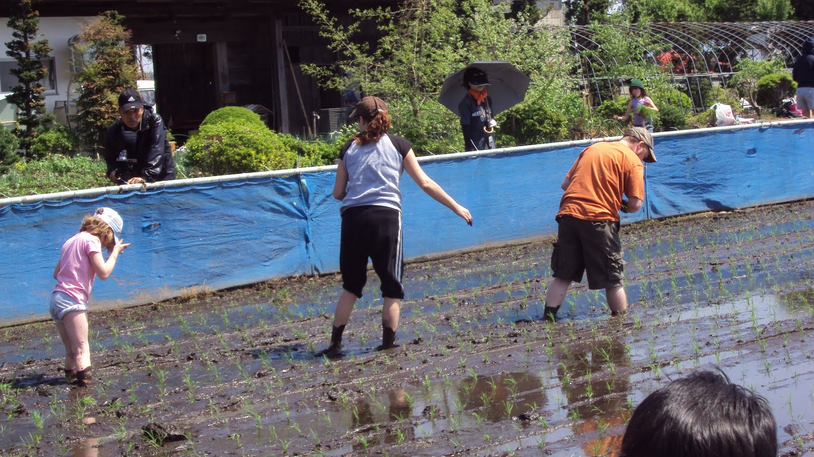 Parkers in Japan: Rice Planting In Takanezawa