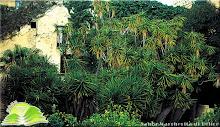 Giardino delle Yucche Palazzo Filangeri Cutò S.margherita B