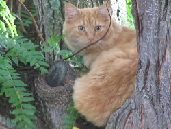 Neighborhood cat lurking in the tree, waiting to catch one of our songbirds!