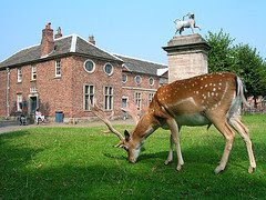Deer and hall at Dunham Massey