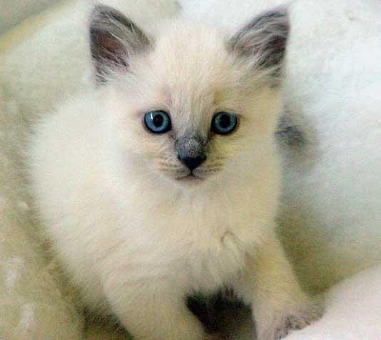 gatos bebes tiernos y lindos