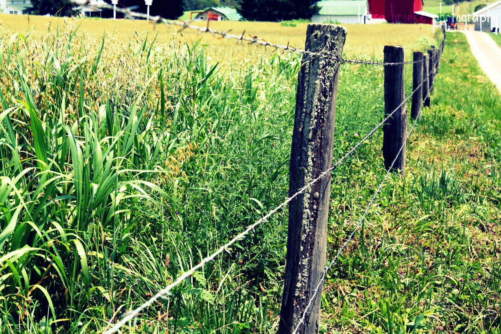 Amish Fence Posts : Chase your dreams ohio trip hayden amish country and