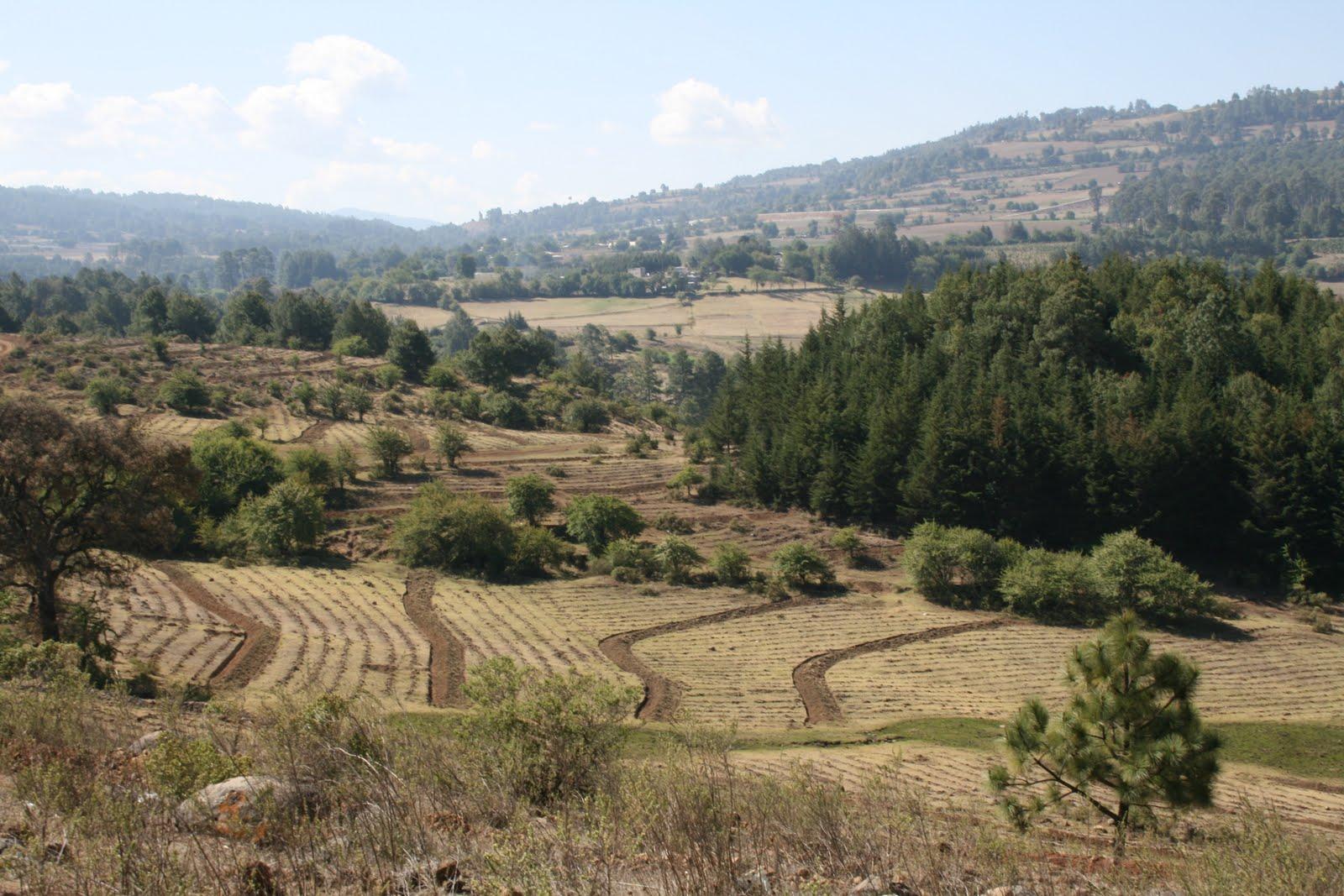 Conafor michoacan destinan 2 5 mdp para restaurar for 4 usos del suelo en colombia