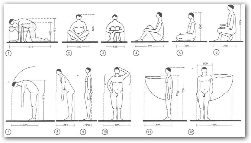 Taller de dise o i arquitectura for Medidas antropometricas del cuerpo humano