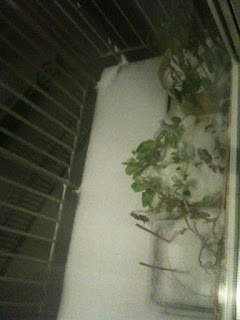 4 inches of snow on the balcony