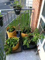 the elevated agriculture balcony garden