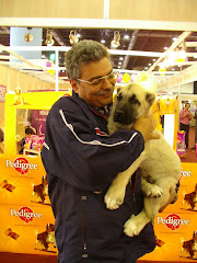 In Dog Show, Istanbul - 2008