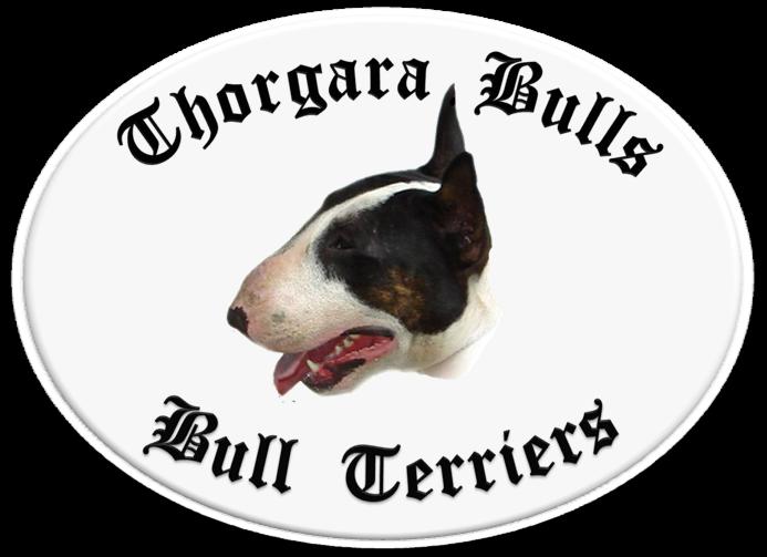 Thorgara Bull's