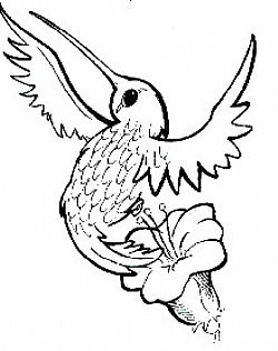 Tatto Art Design Bird Tattoos
