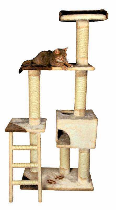cats sixth sense