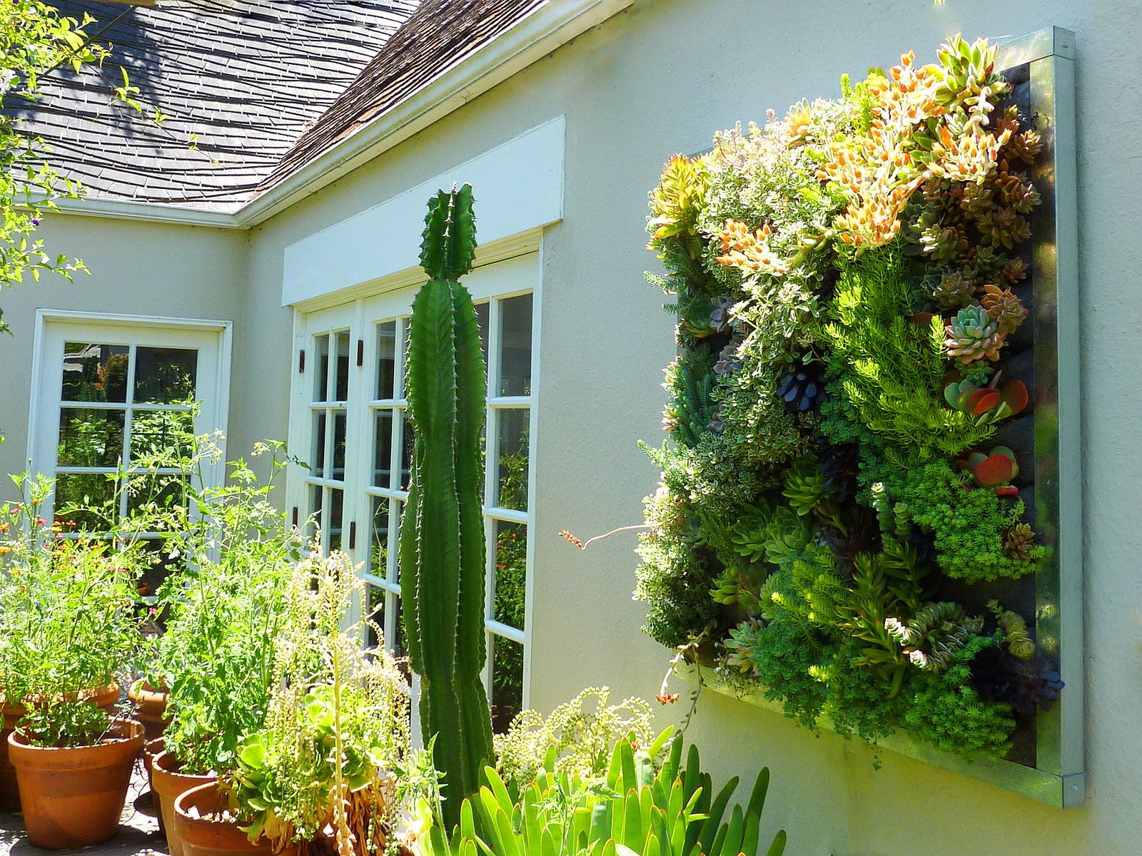 Plants on walls vertical garden systems gilman succulent for Vertical garden wall systems