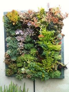 Gilman Succlent/Sedum Living Wall Panel