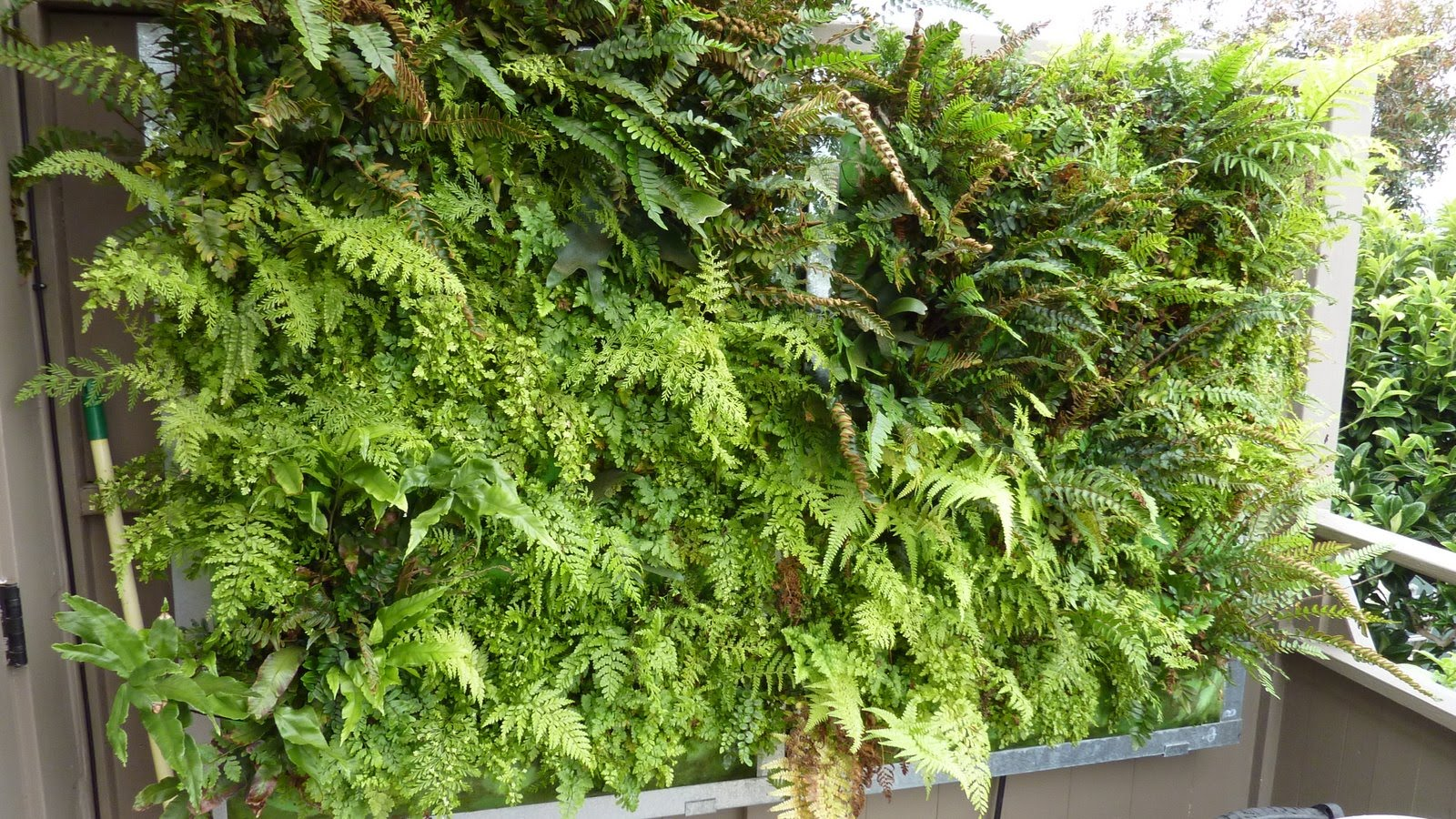 plants on walls vertical garden systems fern wall. Black Bedroom Furniture Sets. Home Design Ideas