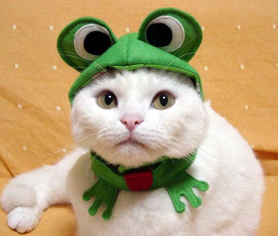 Cute Cats In Halloween Costumes Images amp Pictures Becuo