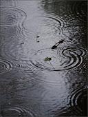 Tears & Rain