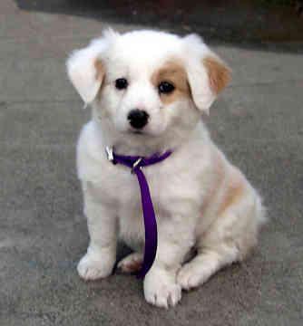 Jenis Jenis Anjing
