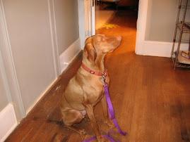 """Cayle""""s Dog Ollie"""