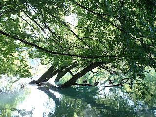 arbre immergé abritant des canards