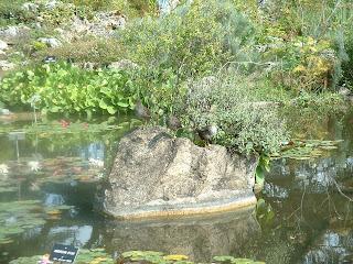Trois canards sur un rocher du bassin des nénuphars