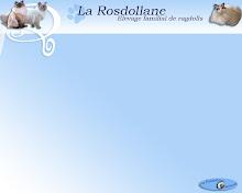www.ragdolls.fr è l'Allevamento dove è nato White King..se vuoi accedere al sito clicca la foto
