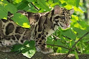 Best Jungle Life