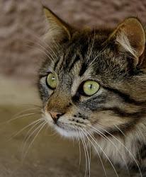O meu gato Gil