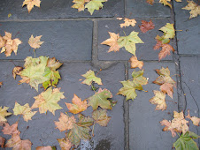 A little of fall lingers...