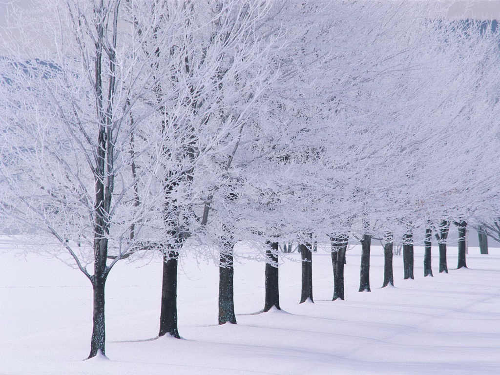 winter and snow trees - photo #3