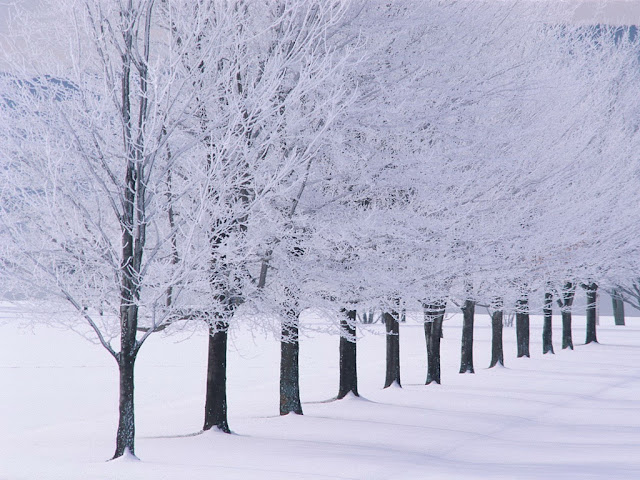 Winter wallpaper snow tree lined