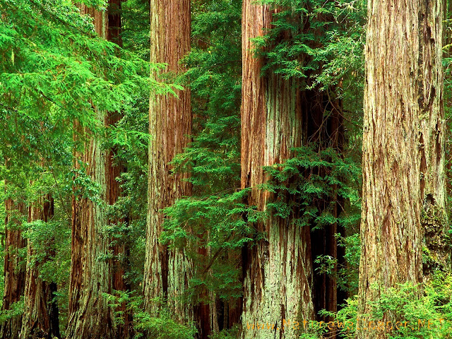 Ancient basin redwood state park