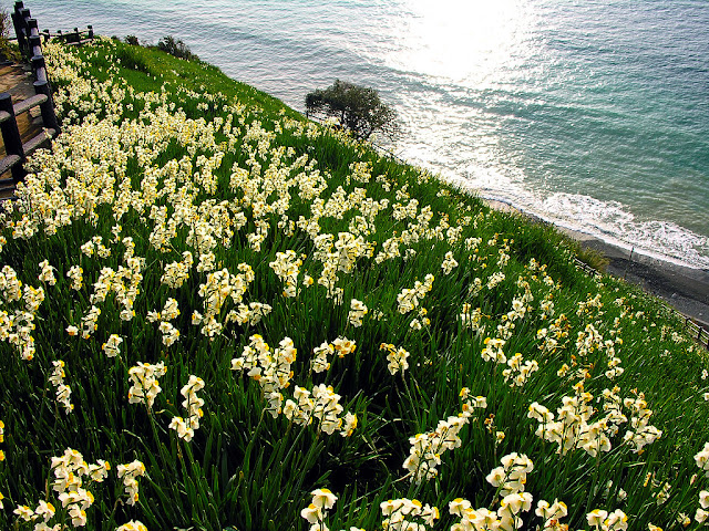 Lakeside Asphodel Flowers Wallpaper