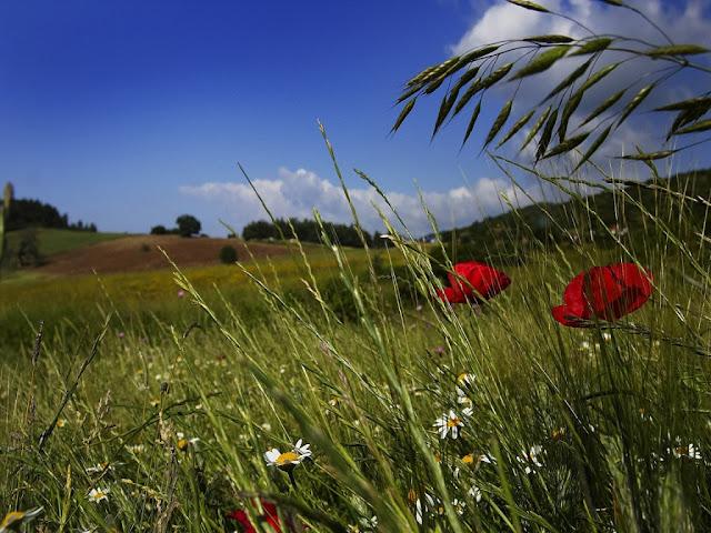 Daisy Flower Landscape Wallpaper