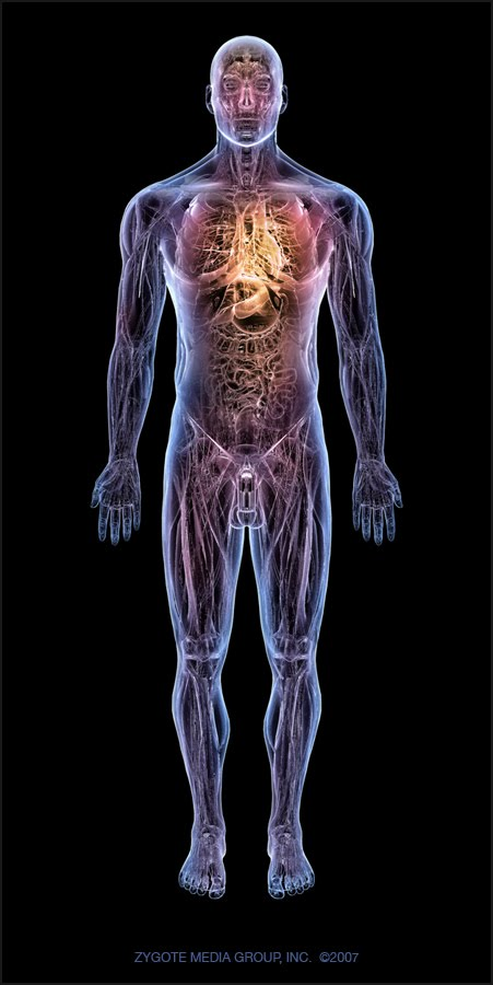 Best Guides To Follow Human Anatomy Physiology Study Course