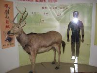 display in interpretive center