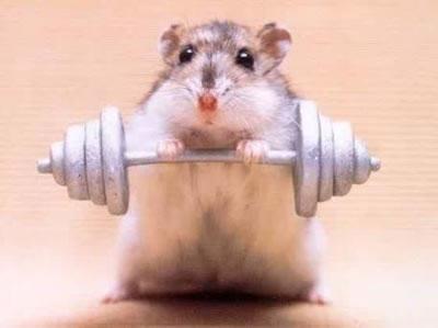 gambar hewan - foto hamster