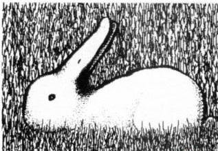 Another Duck or Rabbit Illusion
