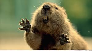 Bridgestone s Beaver a...