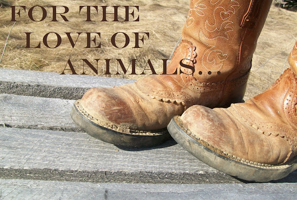 For the Love of Animals...