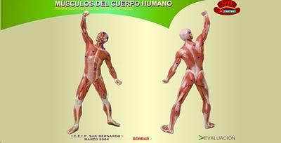 http://www2.gobiernodecanarias.org/educacion/17/WebC/eltanque/CM6/cuerpo/muscuerpo.html
